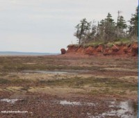 Photo of tidal pools and shoreline at Point Prim PEI