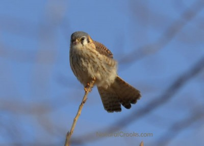 Photo of Mystery Bird in Tree at Lakeside Park Mississauga ON February B