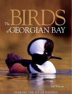 BirdsofGeorgianBay