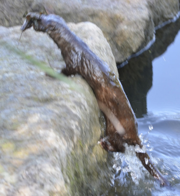 Photo of Mink Up Crayfish on NaturalCrooksDotCom