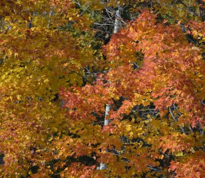 Photo of Autumn Leaves on NaturalCrooksDotCom