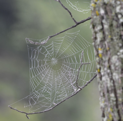 Photo of Spider Web on NaturalCrooksDotCom