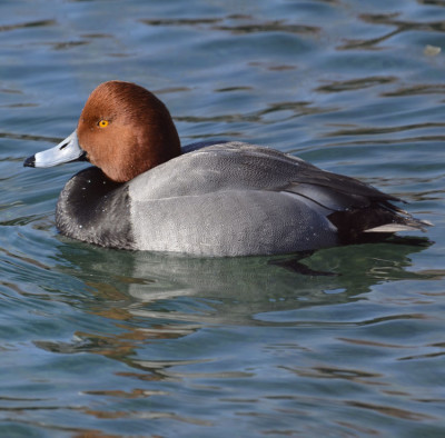 Photo of Redhead Male West on NaturalCrooksDotCom