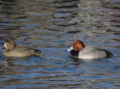 Photo of Redhead Male and Female On NaturalCrooksDotCom