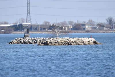 Photo of Snowy Owl On Island on NaturalCrooksDotCom
