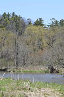 Photo of Sixteen Mile Creek Oakville on NaturalCrooksDotCom