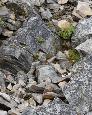 Photo of American Pika Can You Spot It on naturalcrooksdotcom