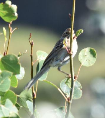 Photo of Sparrow Horseshoe Canyon on NaturalCrooksDotCom