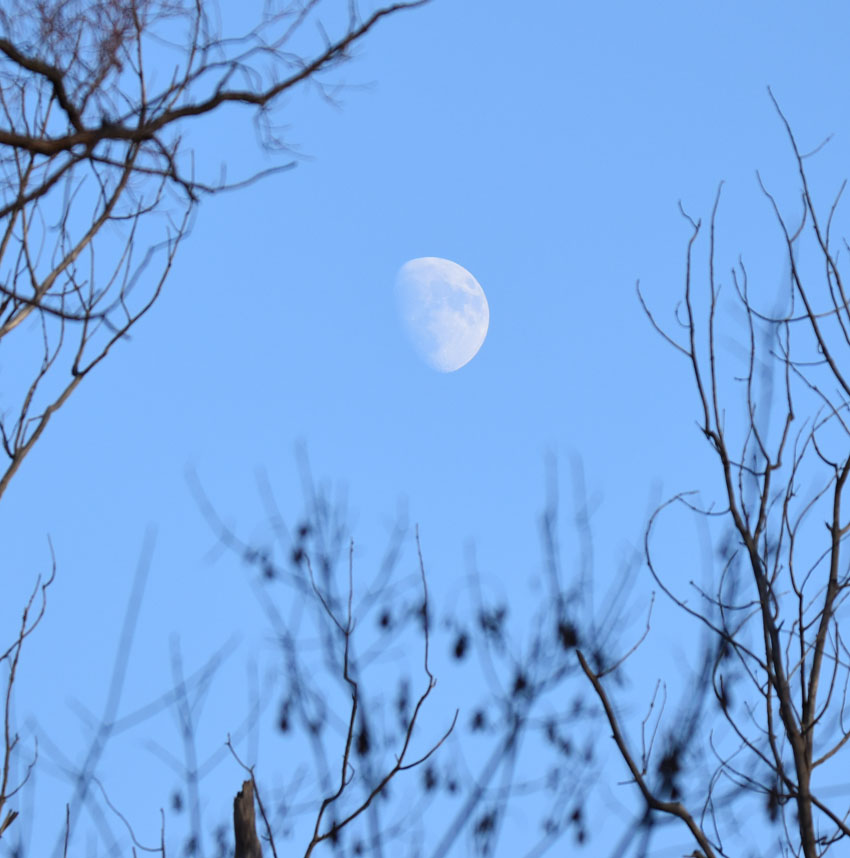 Photo of Moon Riverwood on naturalcrooksdotcom