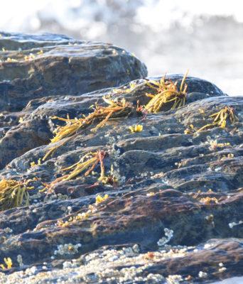 Photo of Sea Rocks A on NaturalCrooksDotCom