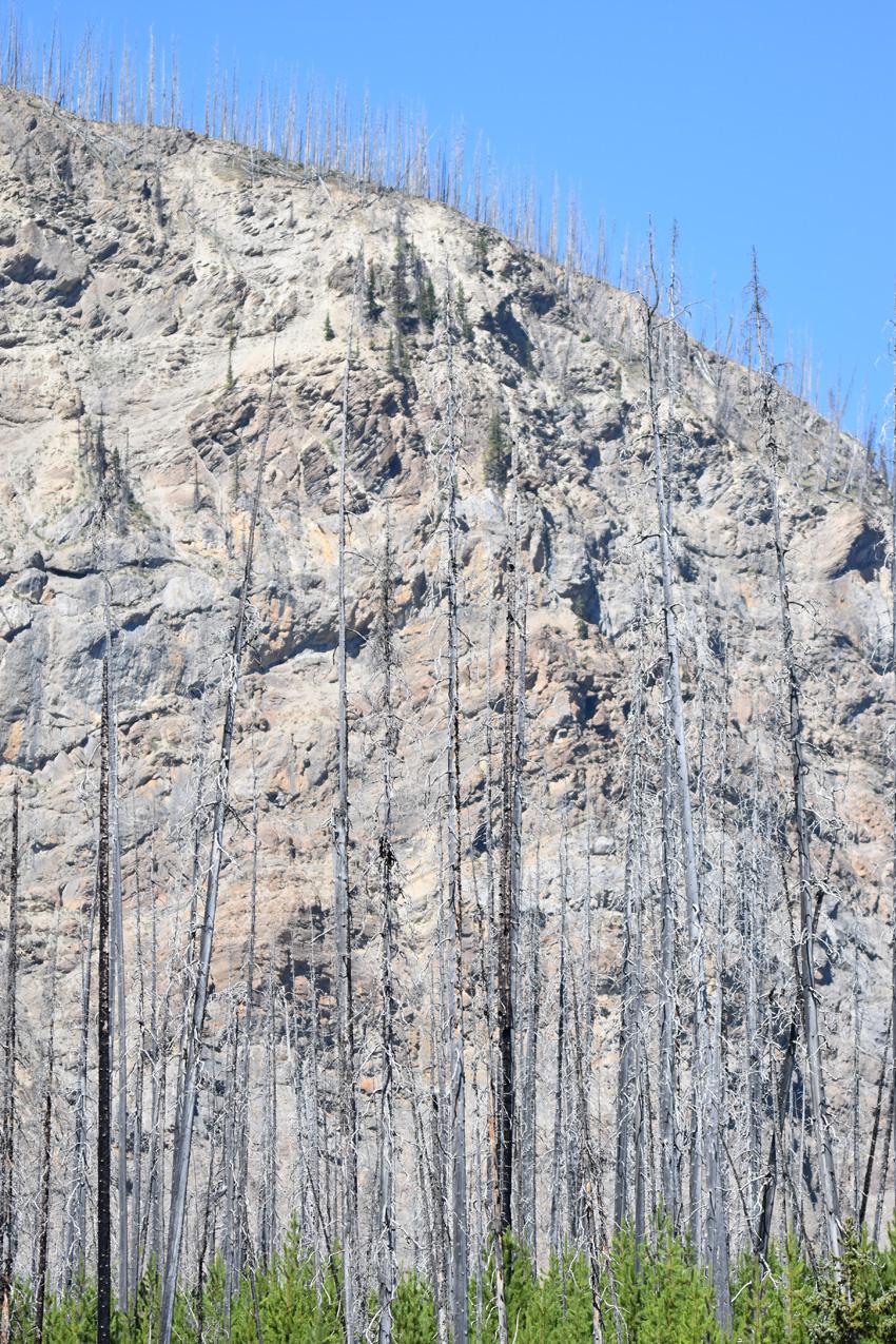 Photo of Forest Fired on NaturalCrooksDotCom
