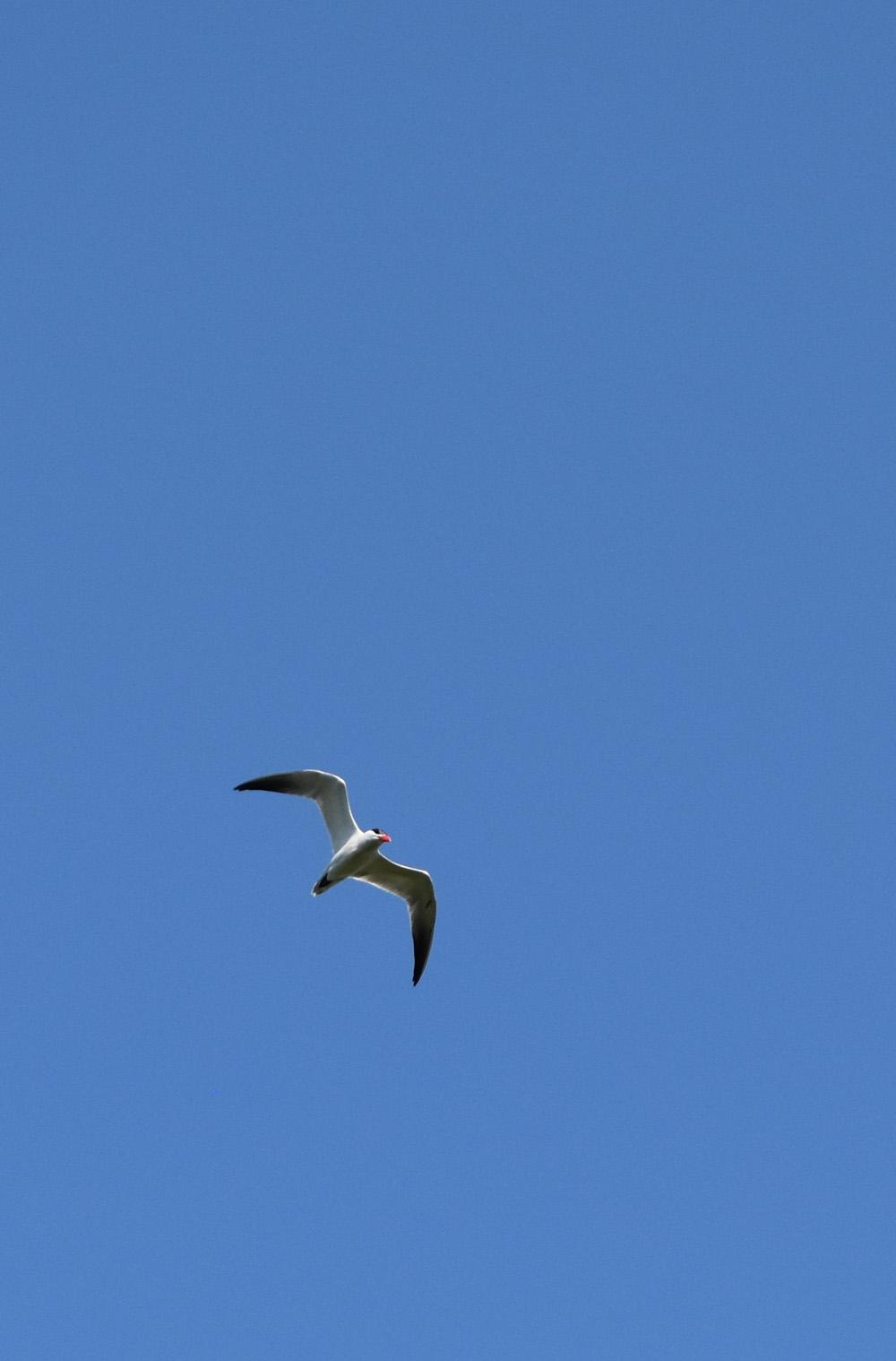 Photo of Tern Urquhart on NaturalCrooksDotCom