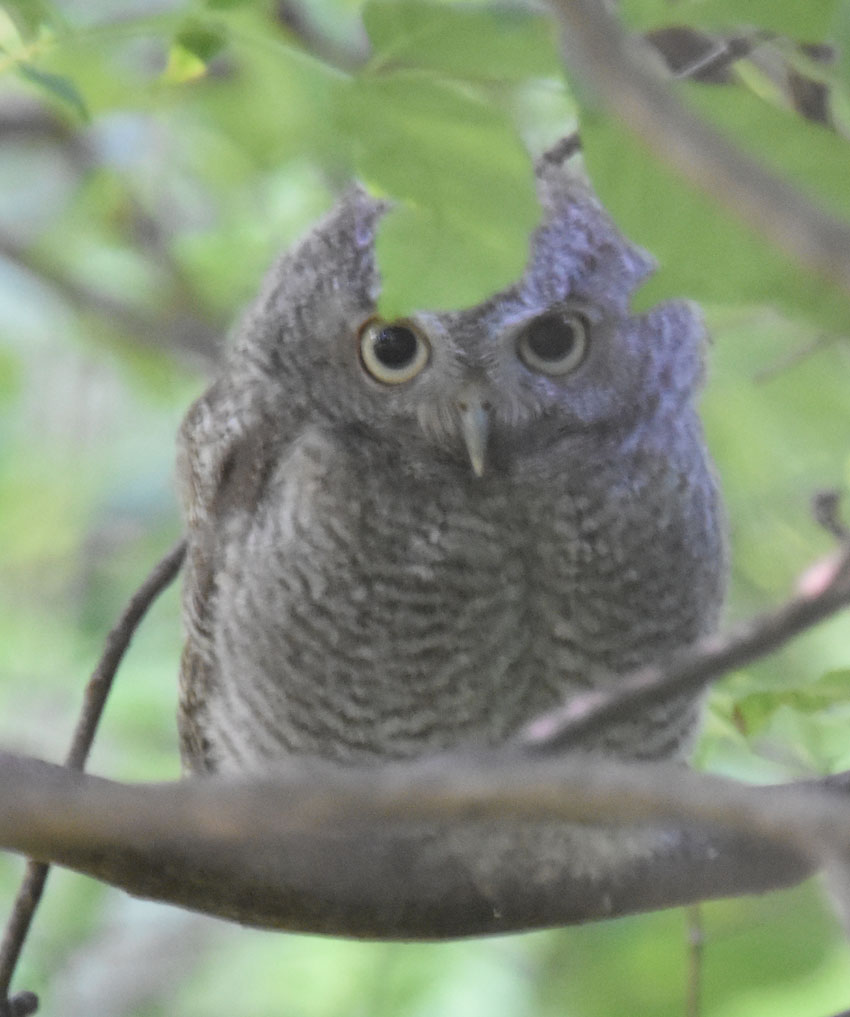 Last Spring Guided Bird Walk At Riverwood Conservancy Ends